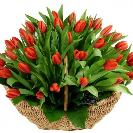Корзина алых тюльпанов «Весенний экспромт»