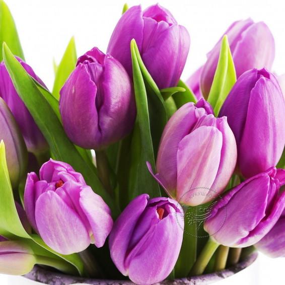 Тюльпаны Фиолетовые Panter