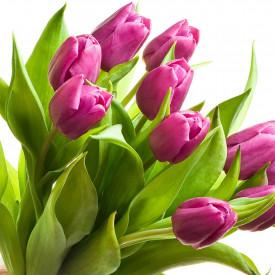 Тюльпаны Розово-Лиловые Barselona