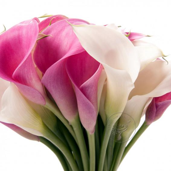 Калла Розовая и Белая