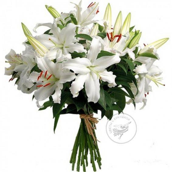 Лилия крупная белая