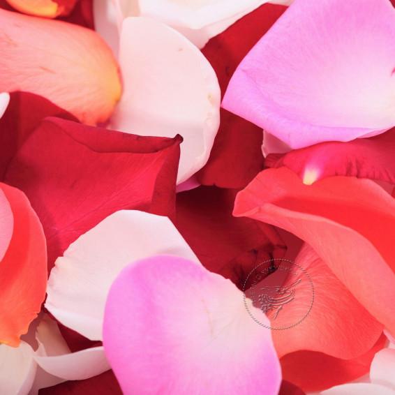 Лепестки роз MIX