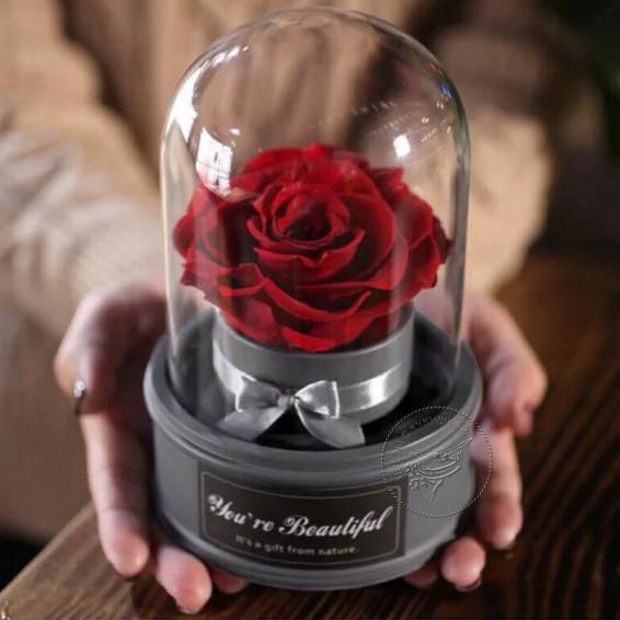 Вечная роза Красная музыкальная