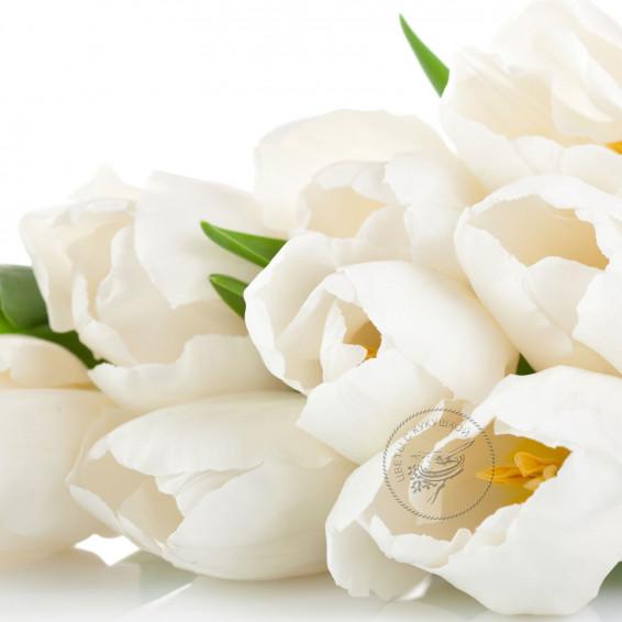 Тюльпаны Белые Antarctica