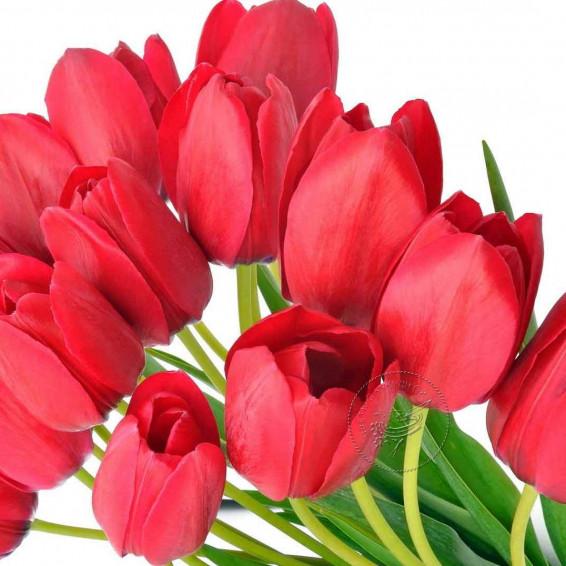 Тюльпаны Красные Ile De France