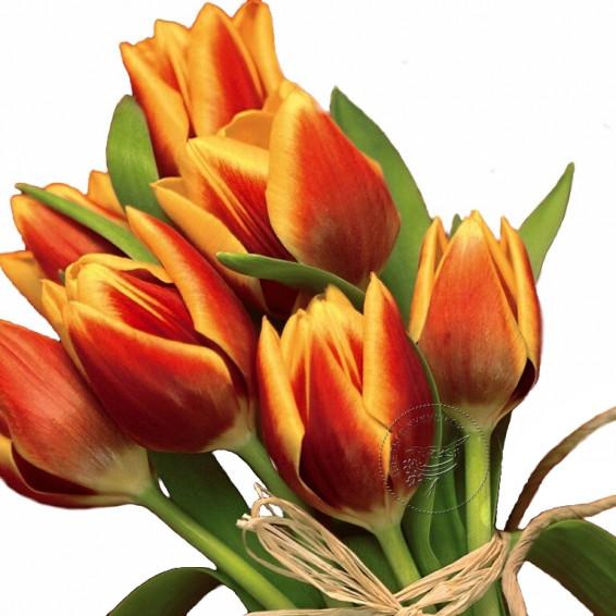 Тюльпаны Красные с Желтым Hiker